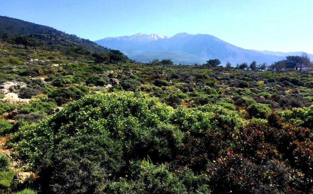 Blick nach Osten, Pachnes im Hintergrund, Lefka Ori,Gebirge