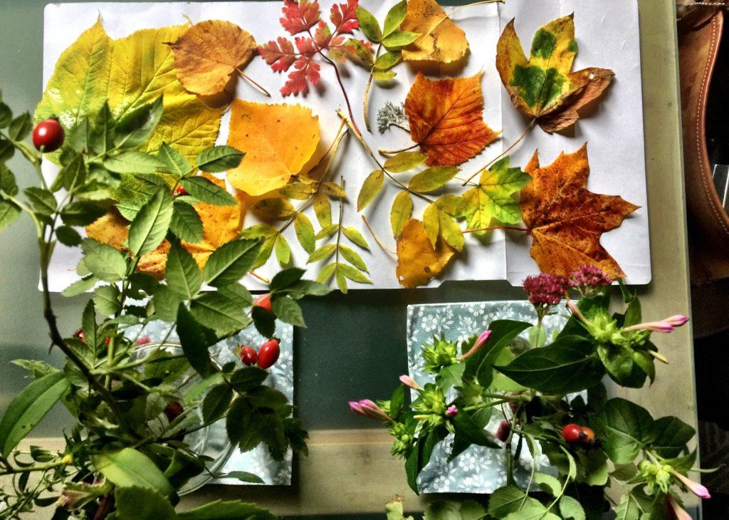 Herbstblätter, Hagebutte,